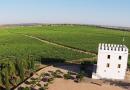 Turismo do azeite ganha adeptos no sul de Portugal