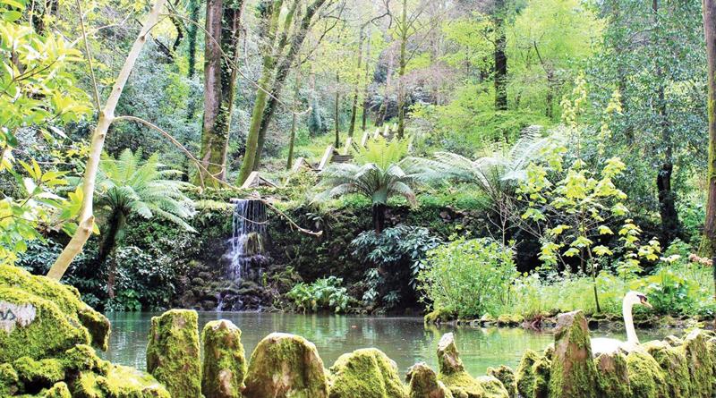 Buçaco estabelece novo recorde de visitantes em 2017