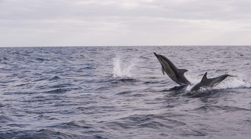 Um passeio de barco para ver golfinhos no Algarve