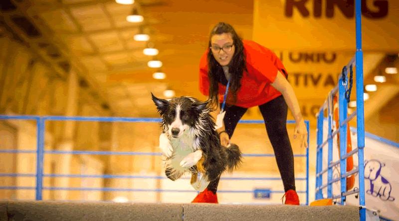Cães, gatos e companhia: o Pet Festival está de volta