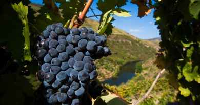 Vinhos portugueses a crescer 50% à boleia do turismo