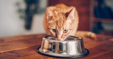 Vai haver um workshop de alimentação saudável para gatos (a entrada é grátis)