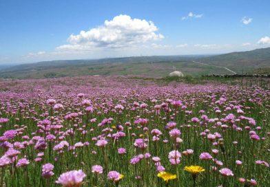Descobrir a pé a «mais desconhecida serra de Portugal»