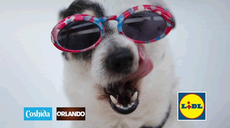 LIDL transforma cães e gatos em embaixadores de campanha de sensibilização contra o abandono animal