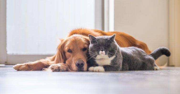 Vai ser obrigatório pagar 2,5€ para registar gatos, cães e furões