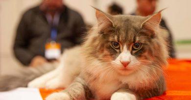 """A 9º edição do Pet Festival foca-se no tema """"Conservação e Preservação de Raças e Espécies"""""""