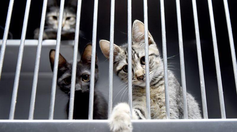 Município de Braga apela à protecção dos animais de estimação