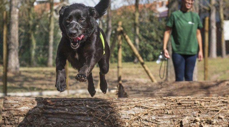 Lagunitas oferece cervejas a quem apadrinhar um cão da SOS Animal na quarentena