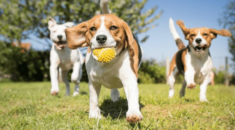 Porto vai ter um parque gigante dividido para cães grandes e pequenos