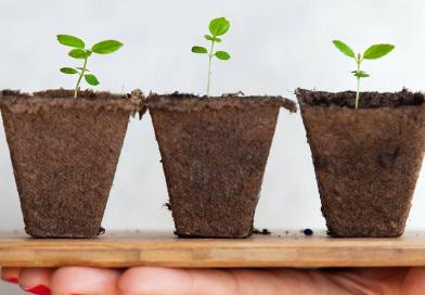 Esta marca portuguesa de subscrição de plantas ajuda-o a fazer uma horta em casa