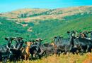 """Em Bragança os produtores de gado antecipam uma Páscoa """"difícil"""""""