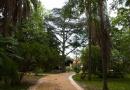 11 parques e jardins para passear ao ar livre – agora que começa a primavera
