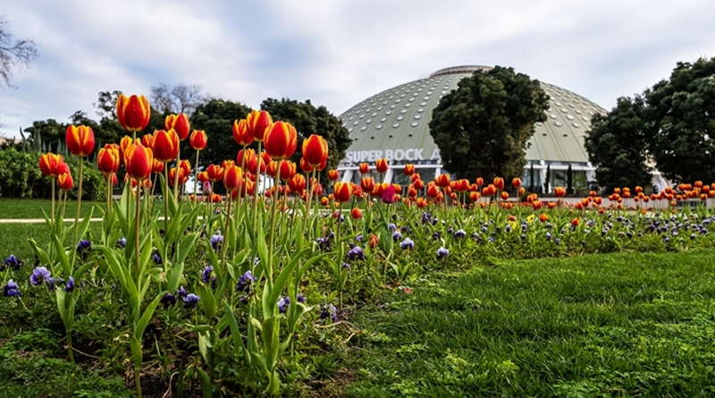 Jardins do Porto vão receber 93 mil tulipas